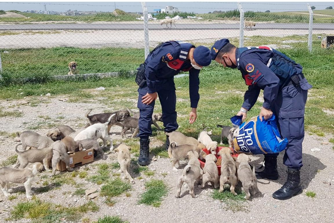 Sokak köpekleri Jandarma'ya emanet