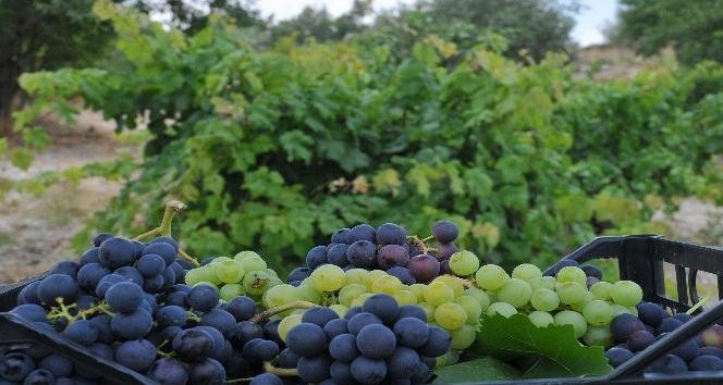 Tarsus'ta üzüm bağı mahkemeden satılıktır