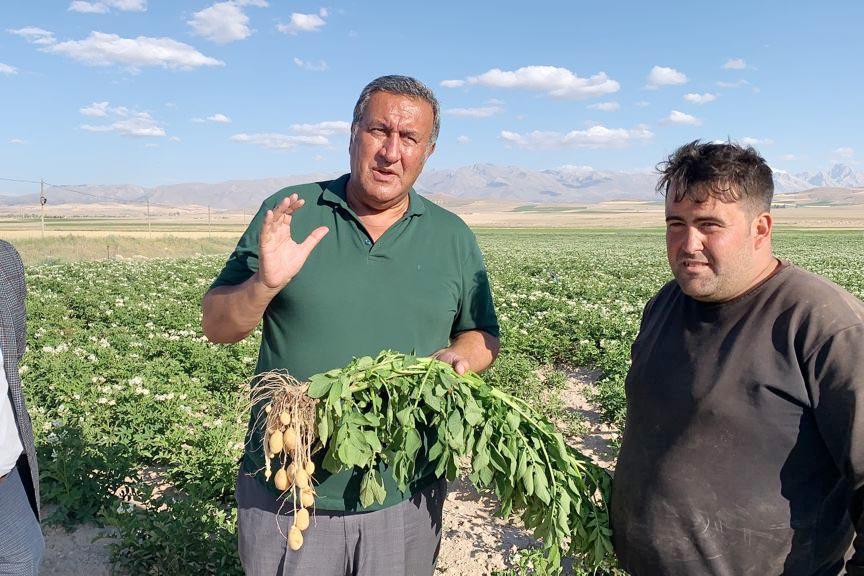 Patates üreticisi kaygılı