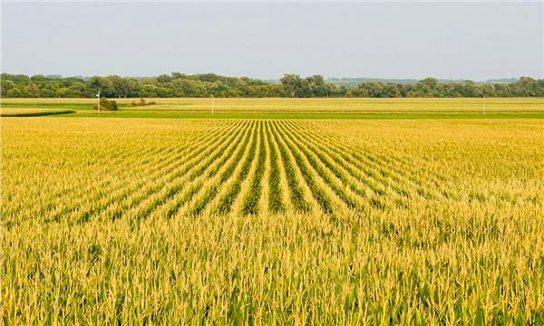 Tarım arazisi icradan satılacak